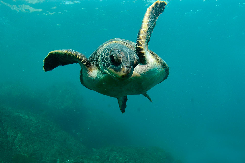 buceo-dive-is-cool-tortuga-o-buceo-dive-is-cool-trainers